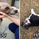 หมาจรจัดเป็นเรื้อนหนัก จนไม่รู้เป็นพันธุ์อะไร พอมีคนช่วยดูแลก็เปลี่ยนไปจนจำไม่ได้