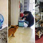อาสาสมัครในอู่ฮั่น ให้อาหารสัตว์เลี้ยงกว่า 300 ตัวที่เจ้าของไม่สามารถกลับมาดูแลได้