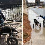 'สุนัขพิการ' ถูกรับเลี้ยง-ส่งคืนถึง 4 ครั้ง แต่ในที่สุด มันก็ได้พบกับครอบครัวที่รักมันจริงๆ