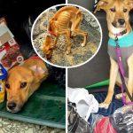 หญิงสาวนำสุนัขของตัวเองไปทิ้งในถังขยะ เพราะอยากย้ายไปอยู่กับแฟนที่ต่างประเทศ