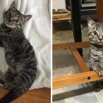 """""""ลูกแมวตัวจิ๋ว"""" ใช้ชีวิตอย่างมีความสุขทุกวัน แม้จะมีขนาดตัวเล็กกว่าอายุถึงครึ่งหนึ่ง"""