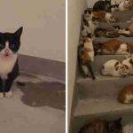 เจ้าหน้าที่ตามหา 'แมวหาย' เพียงตัวเดียว แต่กลับลงเอยด้วยการช่วยแมวนับร้อยตัว…