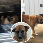 สุนัขดิ้นเอาตัวรอดจนหมดแรง หลังติดอยู่ในเครื่องบดเนื้อ โชคดีที่พนักงานมาพบทันเวลา