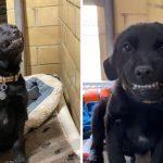 """""""ลูกหมา"""" ในศูนย์พยายามทำตัวน่ารักด้วยการยิ้มให้ทุกคนที่เดินผ่าน หวังให้ใครสักคนรับเลี้ยง"""
