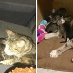 แม่แมวมาคลอดลูกบนเบาะหลังรถที่ถูกยึด โชคดีพนักงานมาพบเข้า จึงได้ช่วยไว้ทันเวลา