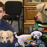 """เด็กชายวัย 12 ปี ทำ """"วีลแชร์จากเลโก้"""" ให้ """"ลูกหมาพิการ"""" ที่ถูกเจ้าของทิ้งตั้งแต่เกิด"""