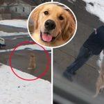 """น้องหมาออกมารอ """"บุรุษไปรษณีย์คนโปรด"""" ทุกวัน เพื่อรับอ้อมกอดแสนอบอุ่นจากเขา"""
