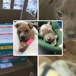 ลูกหมา 2 ตัว เกือบแข็งตาย หลังถูกจับใส่กล่องและนำไปทิ้งท่ามกลางอากาศหนาวจัด