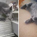 """""""ลูกแมวจร"""" ชีวิตเปลี่ยนไปราวกับฝัน หลังจากไปร้องขอความช่วยเหลือที่หน้าบ้านมนุษย์"""