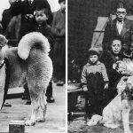 """ภาพหายากของ """"Hachikō"""" สุนัขผู้ซื่อสัตย์จากญี่ปุ่น ที่เฝ้ารอเจ้าของจนลมหายใจสุดท้าย"""