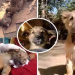 ลูกหมาถูกรถชนจนหมดสติ แต่กู้ภัยช่วยจนรอดมาได้ มันจึงกระดิกหางเป็นการขอบคุณ