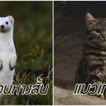 มาดู 10 สัตว์ที่มีหน้าตาน่ารัก ชวนให้เข้าหาแบบสุดๆ แต่ก็อันตรายมากไม่แพ้กัน