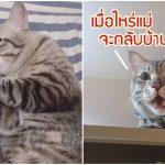 ทาสไม่อยู่บ้าน นึกว่าแมวจะดีใจได้เล่นซนเต็มที่ รู้ทีหลังว่ามันเอาแต่เฝ้ารอทาสกลับมา