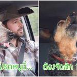 เจ้าหมาได้ยินเพลงโปรด ตอนนั่งรถเล่นกับเจ้าของ เลยหอนตามแบบอินเพลงสุดๆ