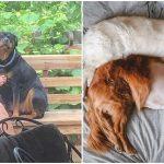 20 รูปหมาซึ่งเปี่ยมไปด้วยรัก จะช่วยเติมใจของคุณให้เต็ม ในเดือนแห่งความรักนี้