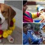 พาชมบรรยากาศ Kukur Tihar ในเนปาล เทศกาลขอบคุณหมาที่อยู่เป็นเพื่อนมนุษย์