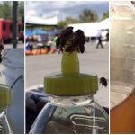 ฝูงผึ้งช่วยกันดันฝาขวด จนได้กินน้ำผึ้งที่อยู่ข้างใน นี่สิพลังแห่งความสามัคคี