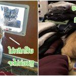 เชิญชม 20 เรื่องป่วนกวนใจทาสแมว สีสันแห่งชีวิตที่เจอทุกวันจากเจ้านายขนปุย