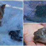 หญิงช่วยชีวิตนก ที่ถูกน้ำแข็งเกาะจนขยับตัวไม่ได้ หลังจากที่เจ้าหมานำเธอไปเจอมัน