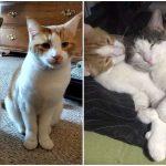 หญิงเพิ่งรู้ว่าแมวที่เลี้ยงมีเพื่อนสนิทที่ศูนย์ จึงรับมันมาอยู่ด้วยกันหลังห่างกัน 7 เดือน