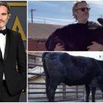 Joaquin Phoenix ช่วยไถ่ชีวิตแม่วัวและลูก จากชะตากรรมอันโหดร้ายในโรงเชือด