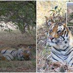 ช่างภาพซื้อที่ดินติดเขตอนุรักษ์ธรรมชาติ ทำให้เขาถ่ายภาพเสือได้อย่างใกล้ชิด