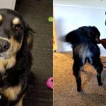 หมาพี่เลี้ยงมือใหม่ คาบตุ๊กตาไปนั่งในเปลเด็ก เพื่อฝึกไกวเปลให้น้องใหม่ของบ้าน
