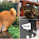 รวม 20 แมวที่ชาวเน็ตบังเอิญไปเจอ แถมยังดูดีมากจนต้องให้คะแนน 10 เต็ม 10!!