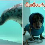 หมาไส้กรอกและเจ้าแมวน้ำ ถูกชะตากันตั้งแต่แรกเจอ กลายเป็นเพื่อนซี้กันทันที
