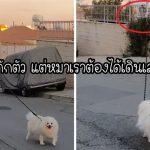 โควิดก็กลัว หมาก็อยากเดินเล่น หนุ่มจึงปิ้งไอเดียใช้โดรนจูงน้องหมาไปเดินเล่นแทน