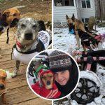 """หญิงสาวรับเลี้ยง """"สุนัขพิการ"""" 6 ตัว และเติมเต็มสิ่งที่พวกมันขาดด้วยความรักอย่างจริงใจ"""