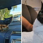 """สองแม่ลูกเซอร์ไพรส์หนักเมื่อมี """"แมวแปลกหน้า"""" โผล่มาในรถ ระหว่างทางไปโรงเรียน"""