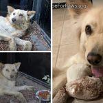 น้องหมาถูกเตะจนเกือบตาย โชคดีถูกช่วยเหลือทันเวลา มันจึงมีชีวิตใหม่ที่สดใสอีกครั้ง