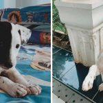 ครอบครัวช่วย 'หมาจร' ตั้งใจจะหาบ้านให้ แต่ดันตกหลุมรักมันซะก่อน เลยรับเลี้ยงไว้เอง
