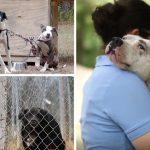 """ชมสารคดีที่ถ่ายทอด """"ชีวิตอันน่าเศร้า"""" ของสุนัขที่ถูกทอดทิ้งและร้องขอความช่วยเหลือ"""