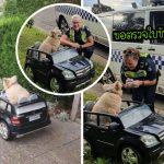 """""""นุ้งหมาหูหนวก-ตาบอด"""" ถูกตำรวจเรียกตรวจ หลังขับรถจิ๋วเที่ยวทั่วเมืองโดยไม่มีใบขับขี่"""