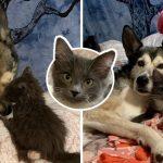 """""""ลูกแมวขาหลังบิด"""" ได้พบกับสุนัขที่ให้ความรักเหมือนแม่ มันจึงกอดพี่ตูบไม่ยอมปล่อย"""
