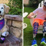 ตูบถูกทิ้งและสูญเสียเท้าทั้ง 4 ข้าง ผันตัวเป็นสุนัขบำบัด หลังถูกรับเลี้ยงโดยครอบครัวใจดี