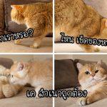 """ปฏิริยาของ """"พ่อแมว"""" เมื่อได้เจอลูกน้อยครั้งแรก ทั้งน่ารักและอ่อนโยนจนคุณสัมผัสได้"""