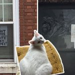 """สาวกักตัวเบื่อเลยลองถาม """"ชื่อแมว"""" เพื่อนบ้านผ่านหน้าต่าง แล้วก็ได้คำตอบกลับมาจริงๆ"""