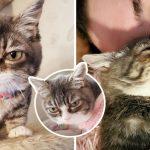 """""""ลูกแมว"""" เกิดมาพร้อมภาวะหายาก แฮปปี้มากเมื่อถูกรับเลี้ยงโดยครอบครัวที่สมบูรณ์แบบ"""