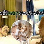 โรงแรมในสหรัฐฯ ให้แขกเลือกสุนัขจากศูนย์ไปอยู่เป็นเพื่อน หากถูกใจก็พากลับบ้านได้เลย