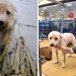 สุนัขถูกละเลยจนขนยางรุงรังเป็นสังกะตัง แต่ความรักทำให้ชีวิตมันเปลี่ยนไปอย่างน่าทึ่ง
