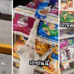"""หญิงสาวตกเป็นทาส """"แมวจรแสนรู้"""" หลังถูกมันต้อนเข้าร้าน และอ้อนให้ซื้อขนมให้"""