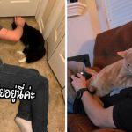 16 ผู้ชายปากแข็งที่ย้ำนักย้ำหนาว่า 'เกลียดแมว' แต่เอาเข้าจริงรักแมวยิ่งกว่าเมียซะอีก