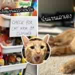 """""""Carrot"""" แมวผู้อยู่ในภาพอันโด่งดัง หลังจากที่มันยื่นแขนเข้ามาในตู้เย็น เพื่อขโมยอาหาร"""