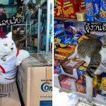 27 ภาพฮาๆ เมื่อแมวเหมียวต้องมาอยู่ใน 'ร้านขายของ' วางอำนาจยิ่งกว่าเจ้าของร้านซะอีก
