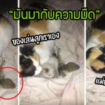 หนุ่มแทบช็อค!! คลำหาลูกแมวในความมืด แต่รู้สึกเหนียวมือ จึงส่องไฟดู… ลุกหนีแทบไม่ทัน