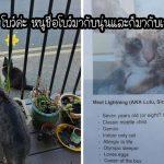 สาว 'เขียนแนะนำแมว' แต่ละตัวของเธอ เพื่อให้พวกมันได้ผูกมิตรกับเพื่อนบ้านมากขึ้น