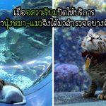 """""""แก๊งลูกหมา-ลูกแมว"""" สุดแฮปปี้เมื่อได้มาสำรวจโลกใต้ทะลในช่วงที่มนุษย์ต้องกักตัว"""